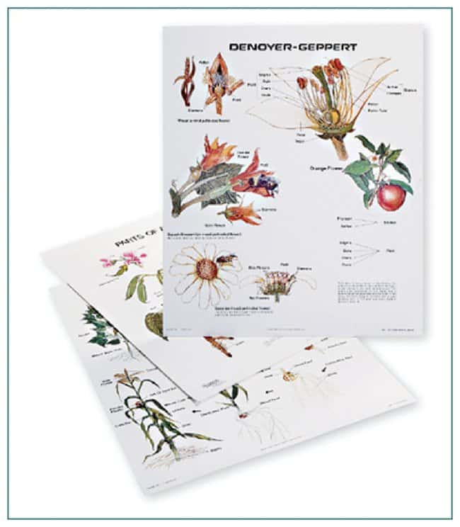 Plant Growth And Development Chart Set Plant Growth And Development