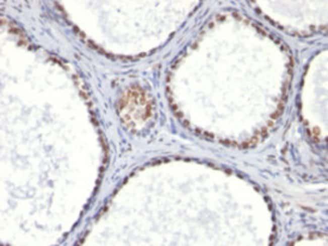 AR Mouse anti-Human, Clone: AR441, Abnova 100μg; Unlabeled:Antibodies