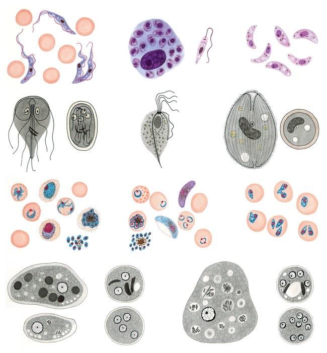 Multimedia Student Set: Parasites of man and animals Multimedia Student
