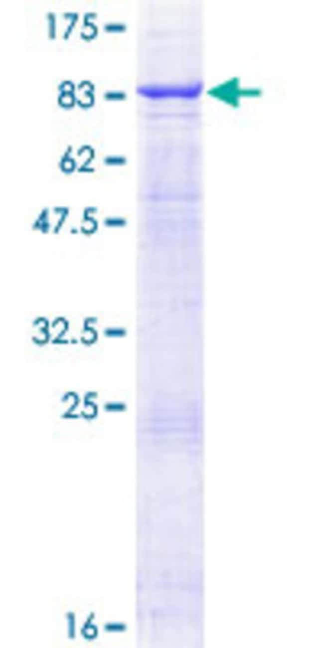 Abnova™Human TRAF5 Full-length ORF (NP_001029082.1, 1 a.a. - 557 a.a.) Recombinant Protein with GST-tag at N-terminal 10μg Abnova™Human TRAF5 Full-length ORF (NP_001029082.1, 1 a.a. - 557 a.a.) Recombinant Protein with GST-tag at N-terminal