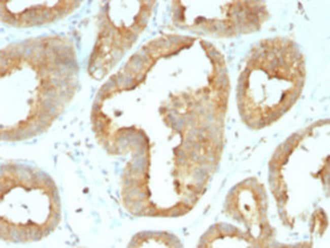HSP90B1 Rat anti-Chicken, Human, Clone: 9G10.F8.2, Abnova 100μg; Unlabeled:Antibodies