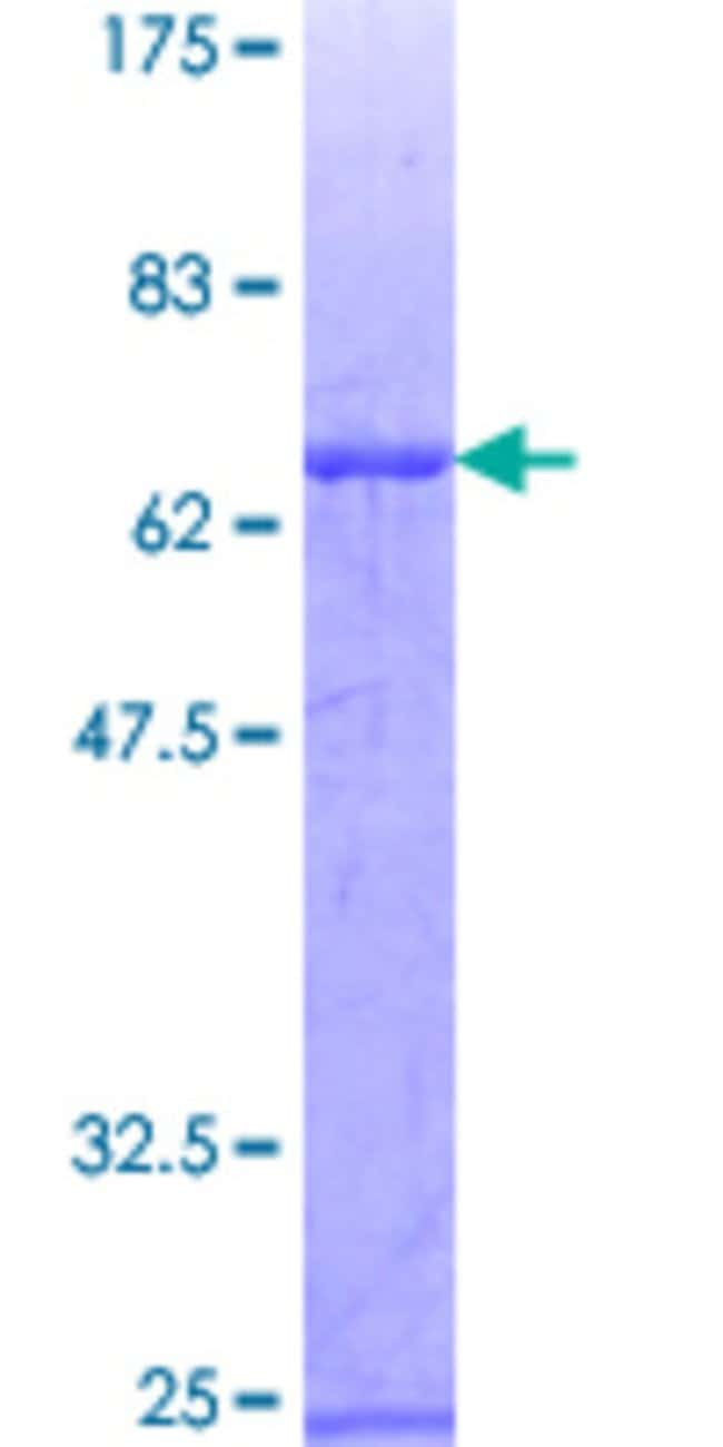 Abnova™Human ZNF3 Full-length ORF (AAH13603, 1 a.a. - 410 a.a.) Recombinant Protein with GST-tag at N-terminal 10μg Abnova™Human ZNF3 Full-length ORF (AAH13603, 1 a.a. - 410 a.a.) Recombinant Protein with GST-tag at N-terminal