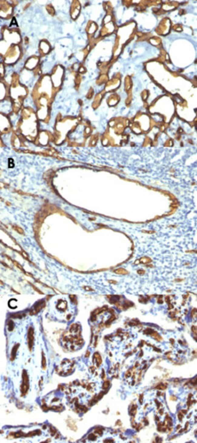 CD34 Mouse anti-Human, Clone: HPCA1/763, Abnova 100μg; Unlabeled:Antibodies