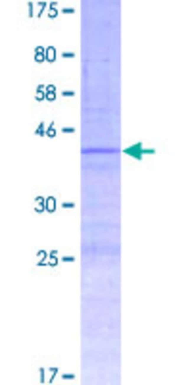 Abnova Human HIST1H4K Full-length ORF (AAI53082.1, 1 a.a. - 103 a.a.) Recombinant