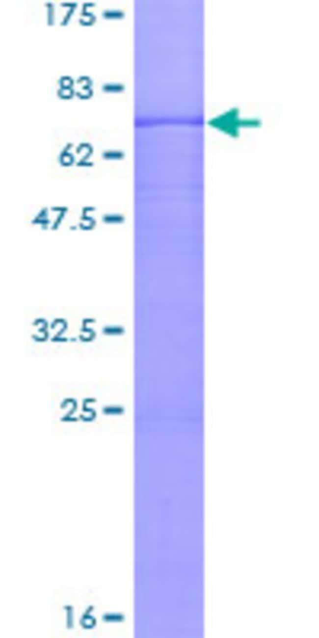 Abnova Human PER3 Full-length ORF (AAH26102.1, 1 a.a. - 378 a.a.) Recombinant