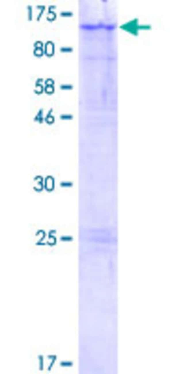 Abnova Human LARGE Full-length ORF (NP_004728.1, 1 a.a. - 756 a.a.) Recombinant