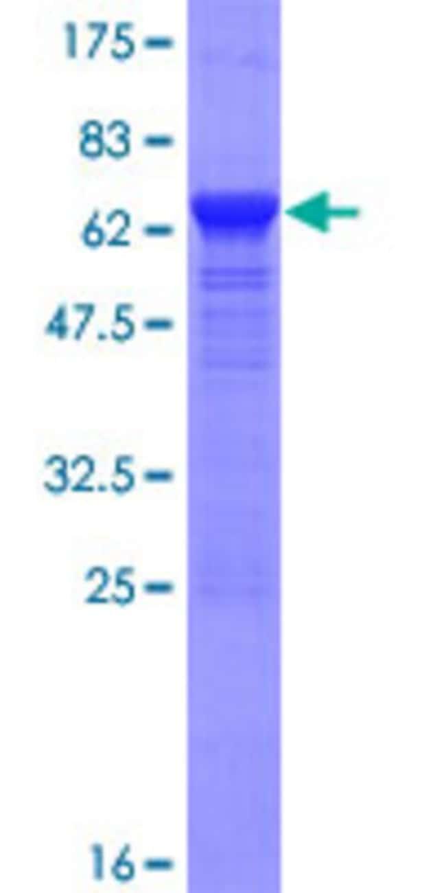 AbnovaHuman PNMA1 Full-length ORF (NP_006020.4, 1 a.a. - 353 a.a.) Recombinant