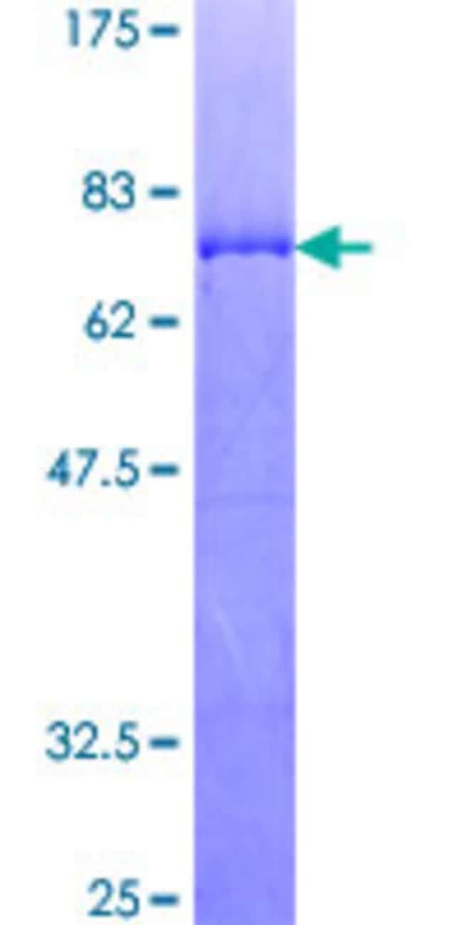 AbnovaHuman MAPKAPK2 Full-length ORF (NP_116584.2, 1 a.a. - 400 a.a.) Recombinant