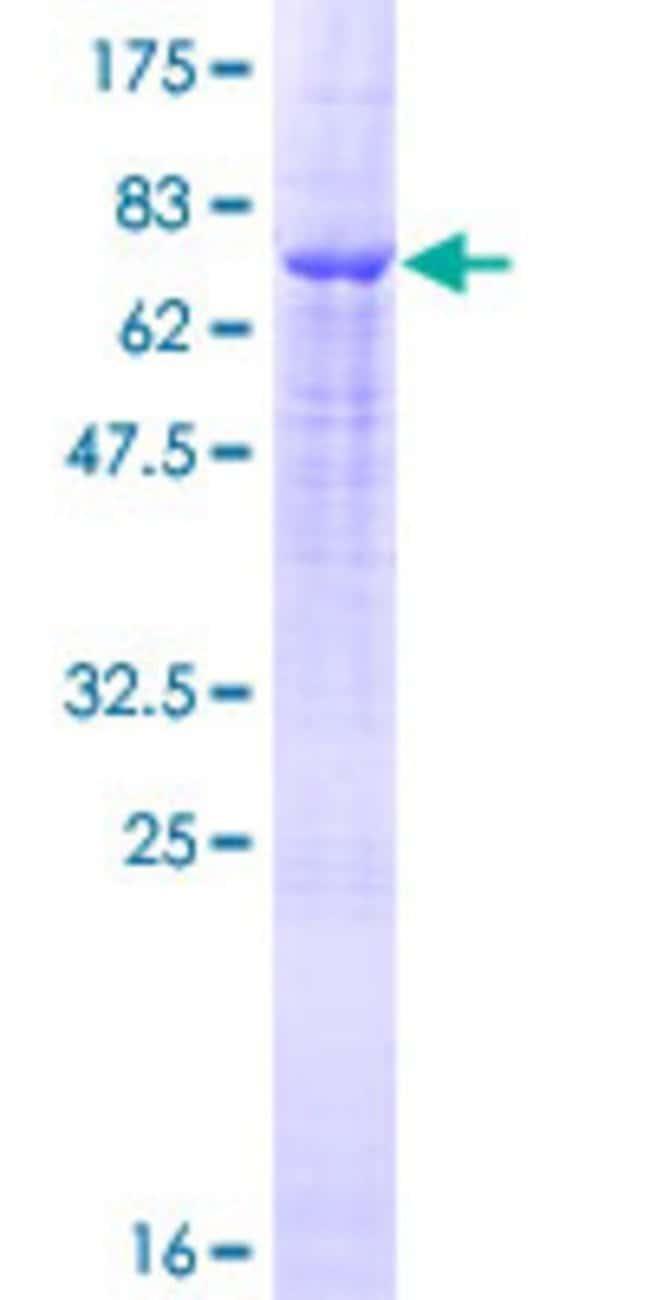 AbnovaHuman TMPRSS11D Full-length ORF (NP_004253.1, 1 a.a. - 418 a.a.)