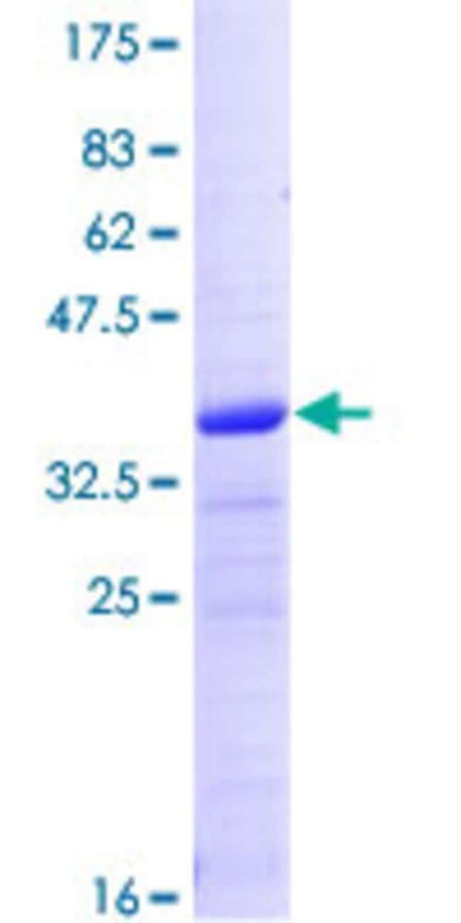 AbnovaHuman CRIPT Full-length ORF (NP_054890.1, 1 a.a. - 101 a.a.) Recombinant