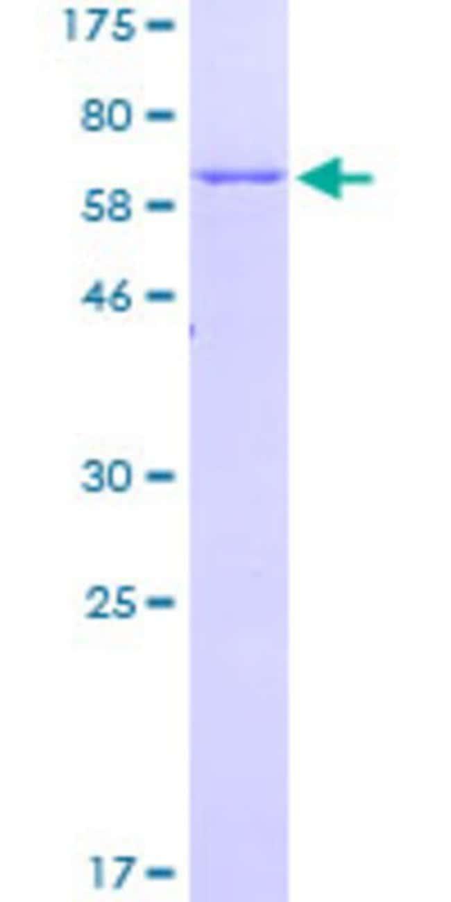 AbnovaHuman HOMER3 Full-length ORF (NP_004829.2, 1 a.a. - 361 a.a.) Recombinant