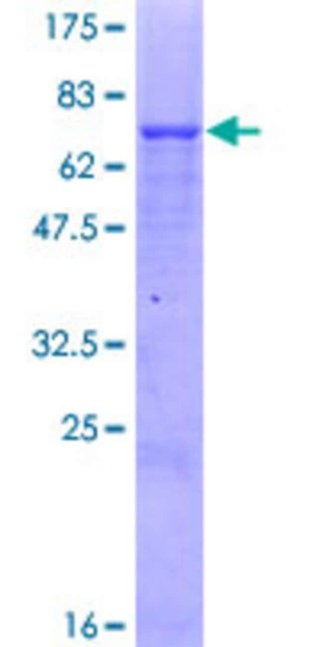 AbnovaHuman PMPCB Full-length ORF (AAH10398.1, 1 a.a. - 490 a.a.) Recombinant