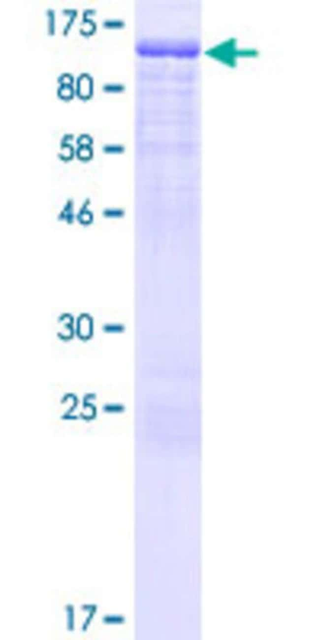 AbnovaHuman FXR2 Full-length ORF (AAH51907.1, 1 a.a. - 673 a.a.) Recombinant