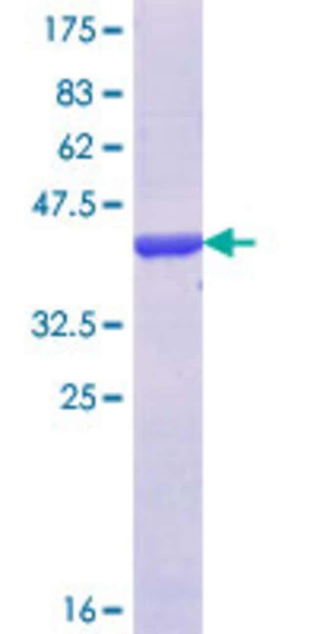 AbnovaHuman PUNC Partial ORF (NP_004875.1, 37 a.a. - 136 a.a.) Recombinant