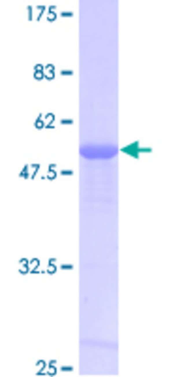 AbnovaHuman PRDX6 Full-length ORF (AAH53550.1, 1 a.a. - 224 a.a.) Recombinant