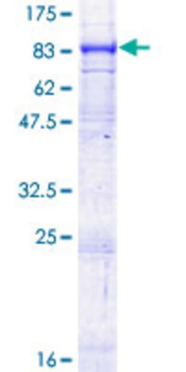 AbnovaHuman ABCG1 Full-length ORF (NP_004906.3, 1 a.a. - 678 a.a.) Recombinant