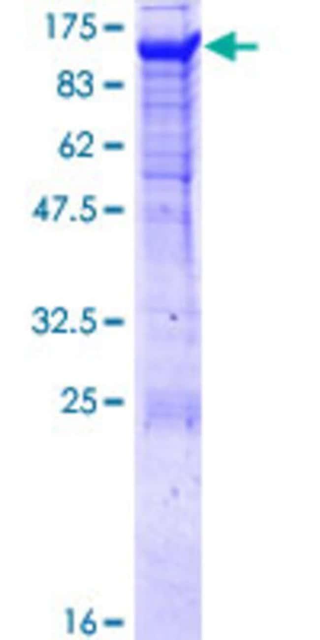 AbnovaHuman PCDHGA8 Full-length ORF (NP_054723.1, 1 a.a. - 820 a.a.) Recombinant