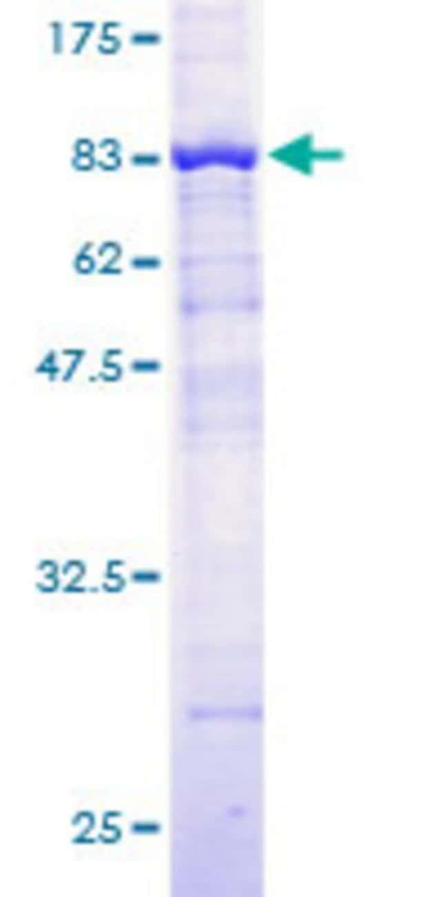 Abnova Human HERPUD1 Full-length ORF (AAH00086, 1 a.a. - 391 a.a.) Recombinant