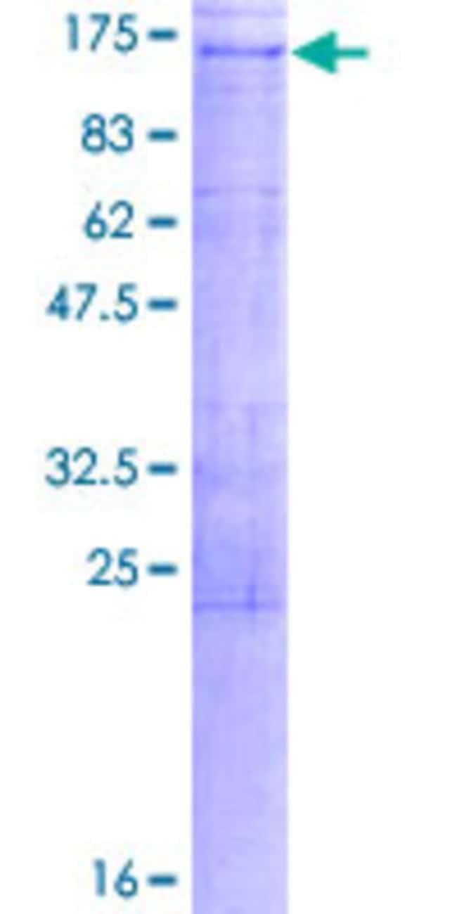 AbnovaHuman STARD8 Full-length ORF (NP_055540.2, 1 a.a. - 1023 a.a.) Recombinant