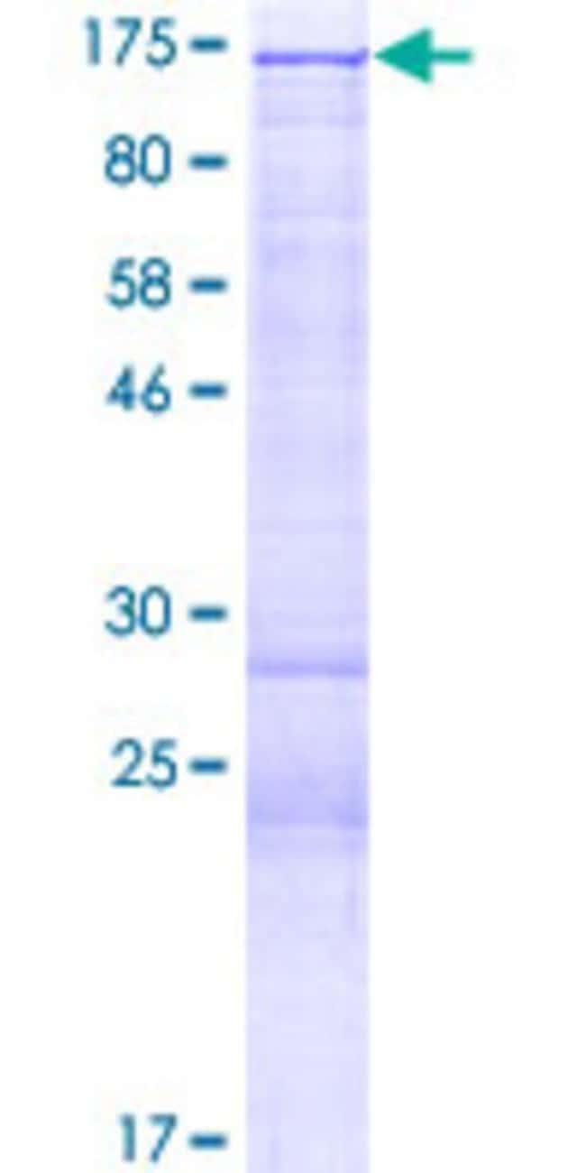 AbnovaHuman HDAC4 Full-length ORF (AAH39904.1, 1 a.a. - 972 a.a.) Recombinant