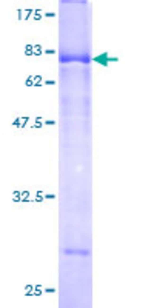 AbnovaHuman SPOCK2 Full-length ORF (AAH23558, 23 a.a. - 424 a.a.) Recombinant