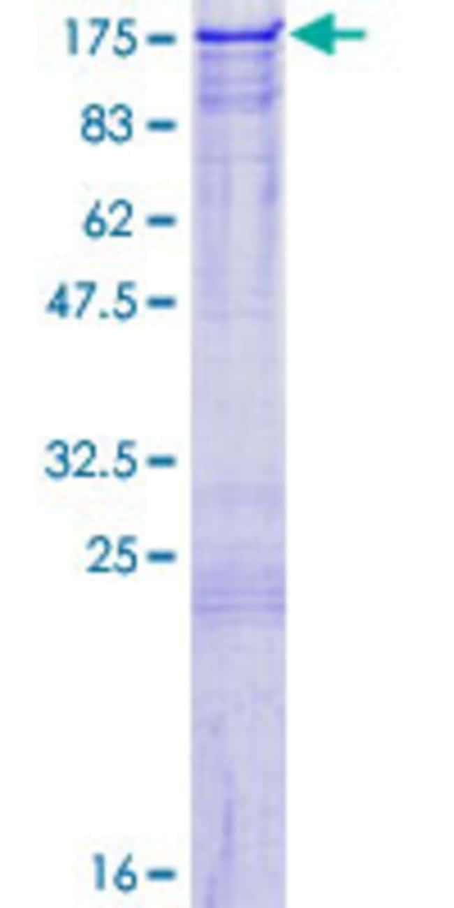 AbnovaHuman PJA2 Full-length ORF (NP_055634.2, 1 a.a. - 708 a.a.) Recombinant