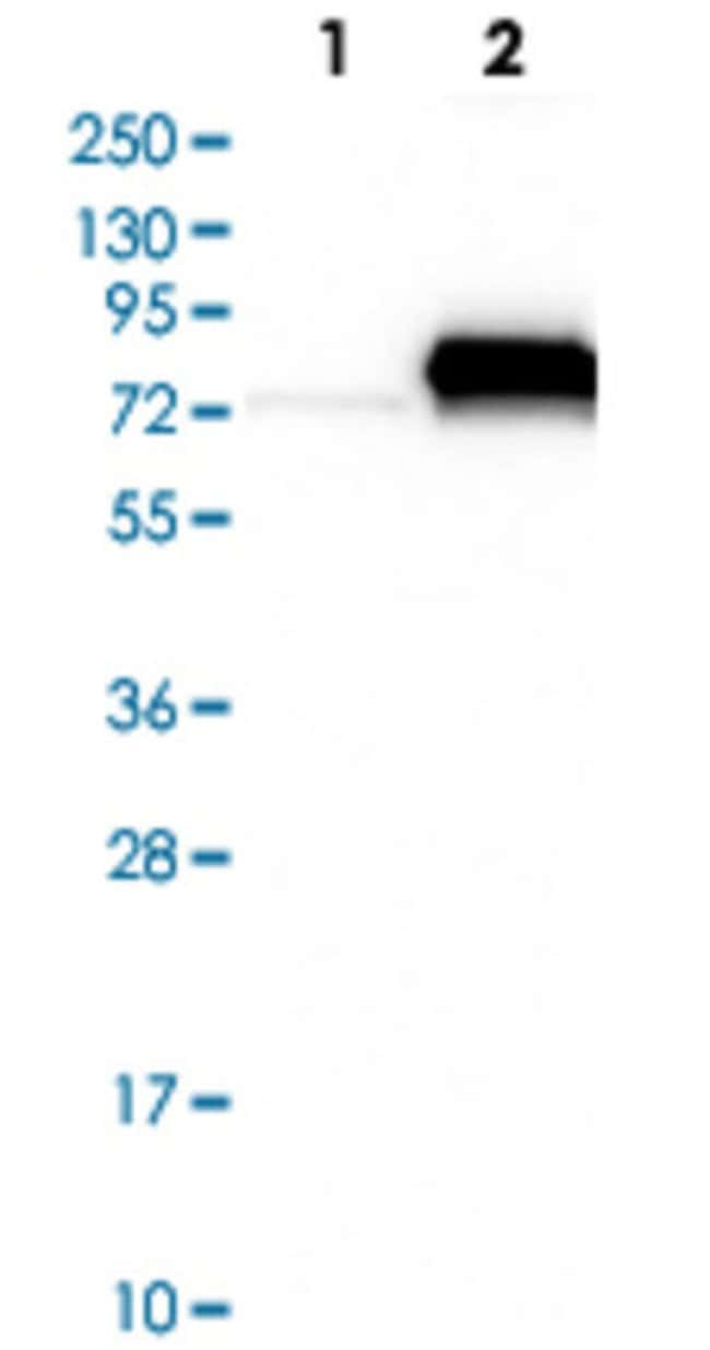 C4BPA Rabbit anti-Human, Polyclonal Antibody, Abnova 100μL; Unlabeled:Antibodies