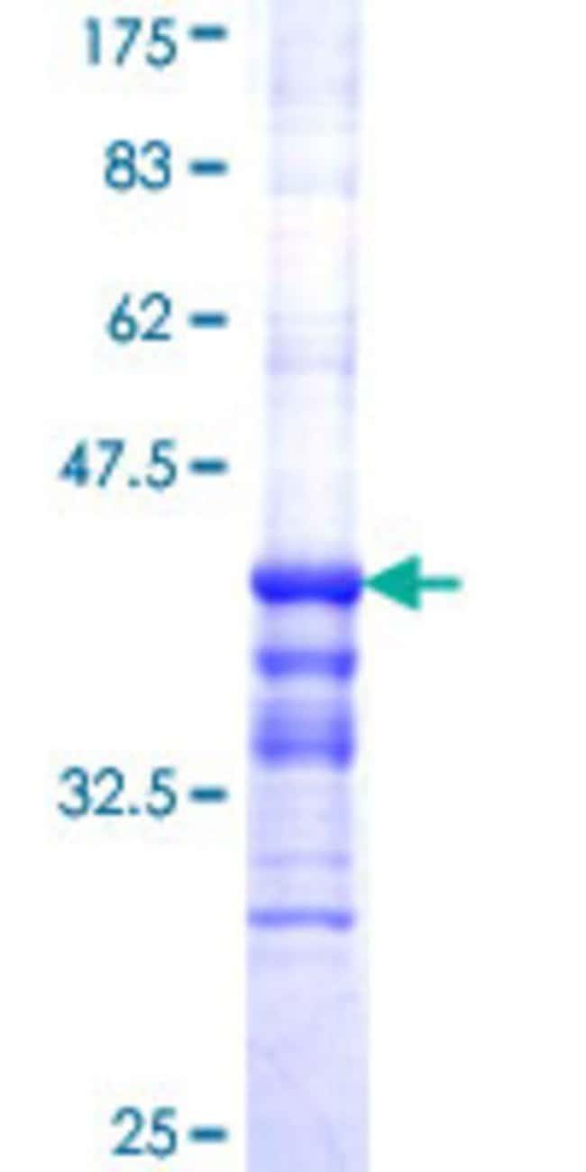 AbnovaHuman APOC2 Partial ORF (AAH05348, 23 a.a. - 101 a.a.) Recombinant