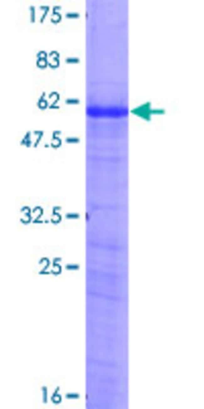 AbnovaHuman AREG Full-length ORF (NP_001648.1, 1 a.a. - 252 a.a.) Recombinant