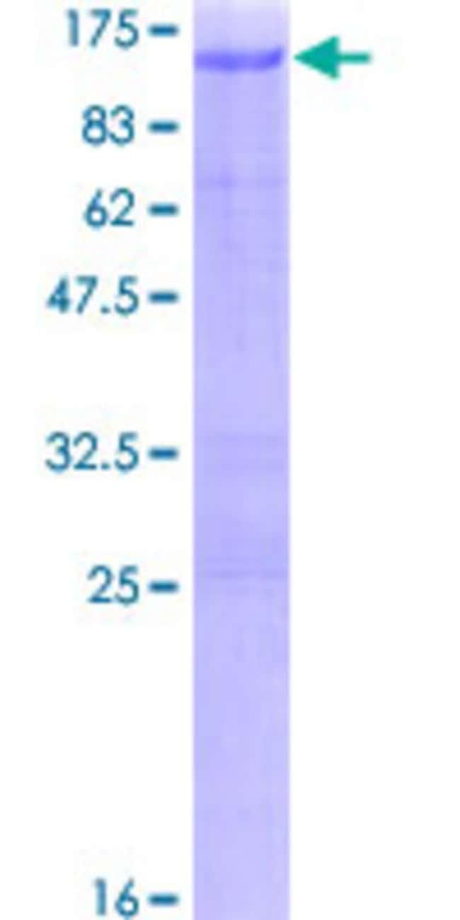 AbnovaHuman ARNT Full-length ORF (NP_001659.1, 1 a.a. - 789 a.a.) Recombinant