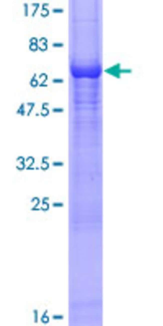 AbnovaHuman ARR3 Full-length ORF (AAH12096.1, 1 a.a. - 359 a.a.) Recombinant