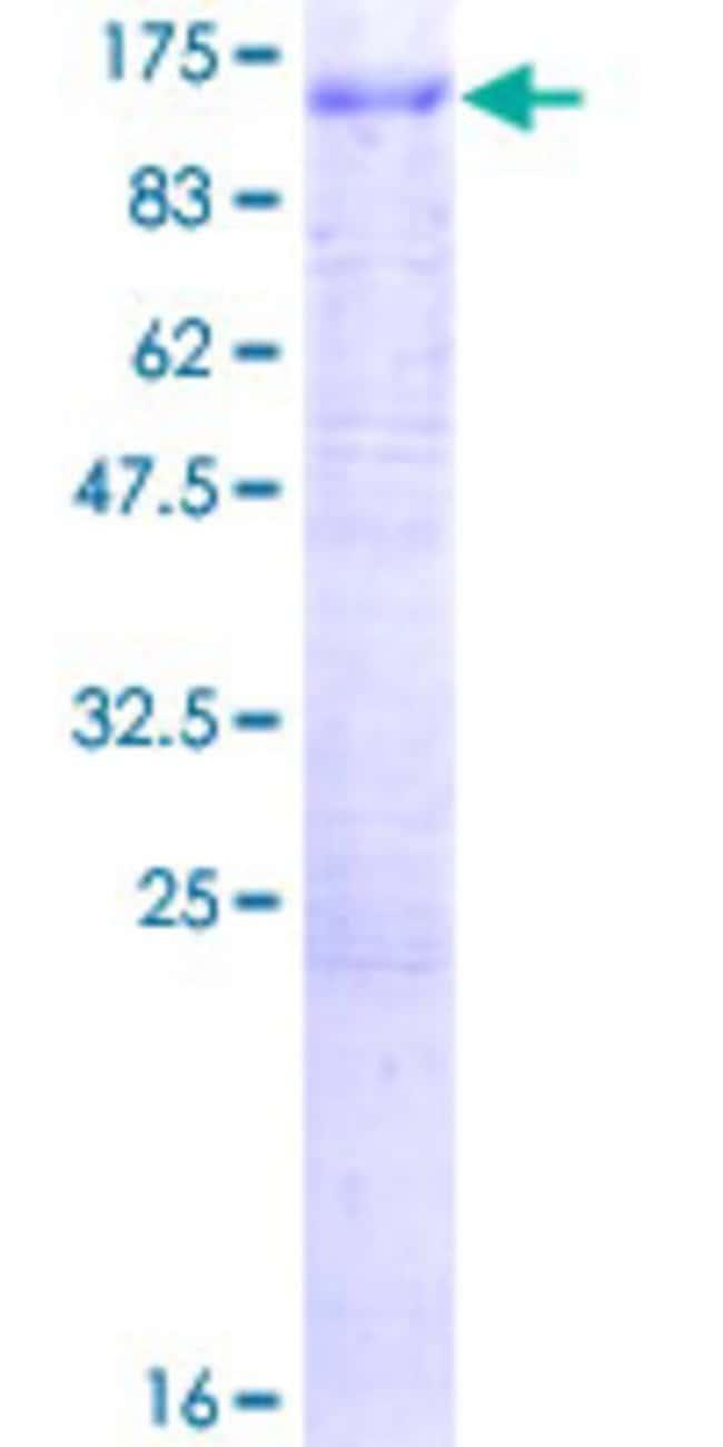 AbnovaHuman ATP6V0A1 Full-length ORF (NP_005168.2, 1 a.a. - 831 a.a.) Recombinant
