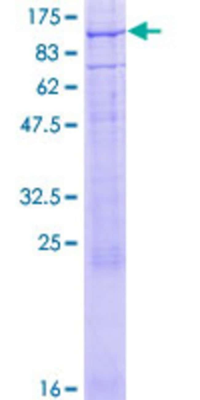 Abnova™Human CNGA3 Full-length ORF (NP_001073347.1, 1 a.a. - 676 a.a.) Recombinant Protein with GST-tag at N-terminal 25μg Abnova™Human CNGA3 Full-length ORF (NP_001073347.1, 1 a.a. - 676 a.a.) Recombinant Protein with GST-tag at N-terminal