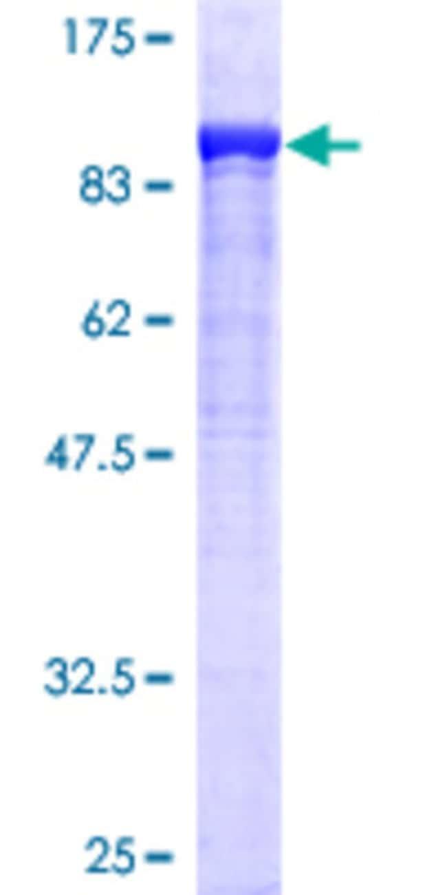 AbnovaHuman DPP3 Full-length ORF (AAH01446, 1 a.a. - 737 a.a.) Recombinant