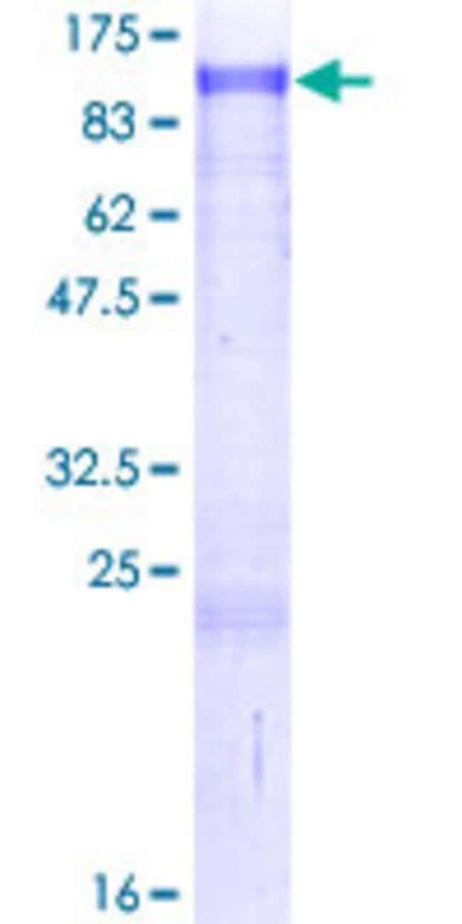 AbnovaHuman ZNF263 Full-length ORF (NP_005732.2, 1 a.a. - 683 a.a.) Recombinant
