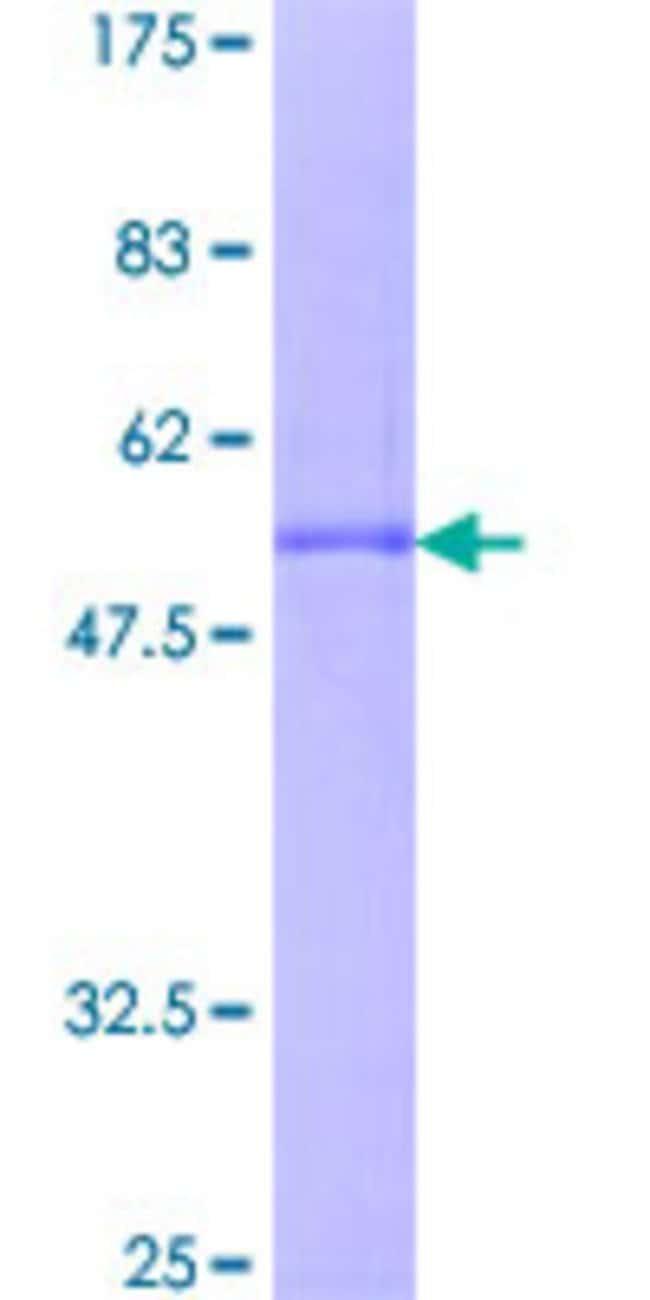 AbnovaHuman RBM7 Full-length ORF (NP_057174.1, 1 a.a. - 266 a.a.) Recombinant