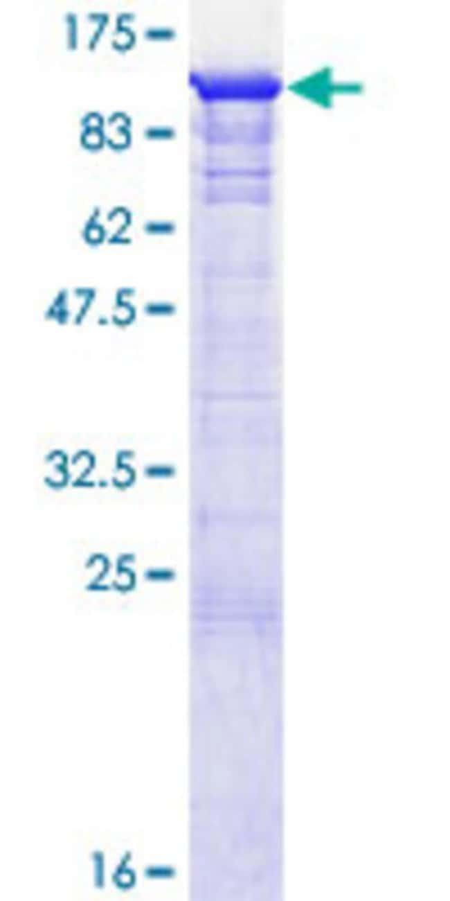 Abnova Human GSPT1 Full-length ORF (AAH09503.2, 1 a.a. - 633 a.a.) Recombinant