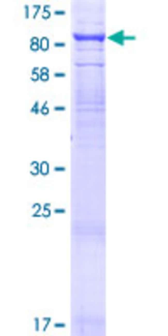 AbnovaHuman TCIRG1 Full-length ORF (NP_006044.1, 1 a.a. - 614 a.a.) Recombinant