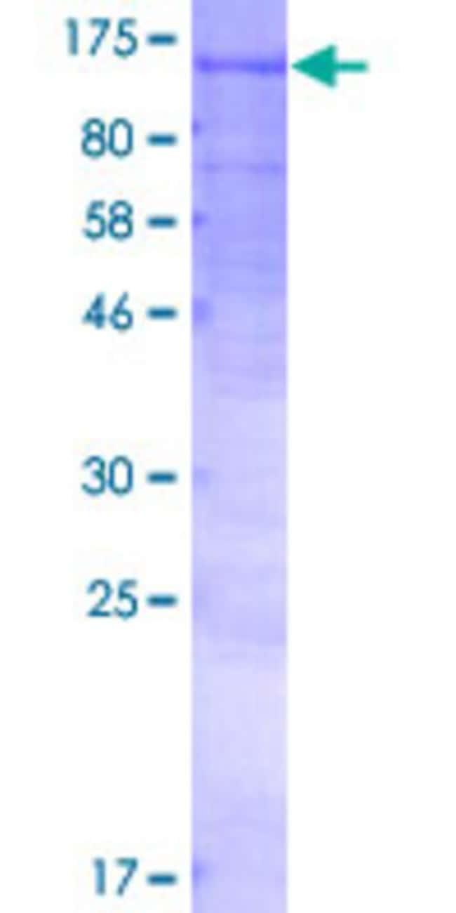 AbnovaHuman NOD1 Full-length ORF (AAH40339.1, 1 a.a. - 953 a.a.) Recombinant