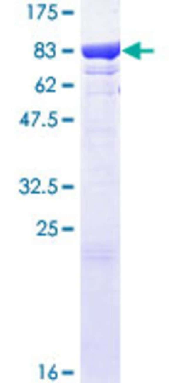 Abnova™Human HSPA1L Full-length ORF (AAH34483.1, 1 a.a. - 641 a.a.) Recombinant Protein with GST-tag at N-terminal 10μg Abnova™Human HSPA1L Full-length ORF (AAH34483.1, 1 a.a. - 641 a.a.) Recombinant Protein with GST-tag at N-terminal