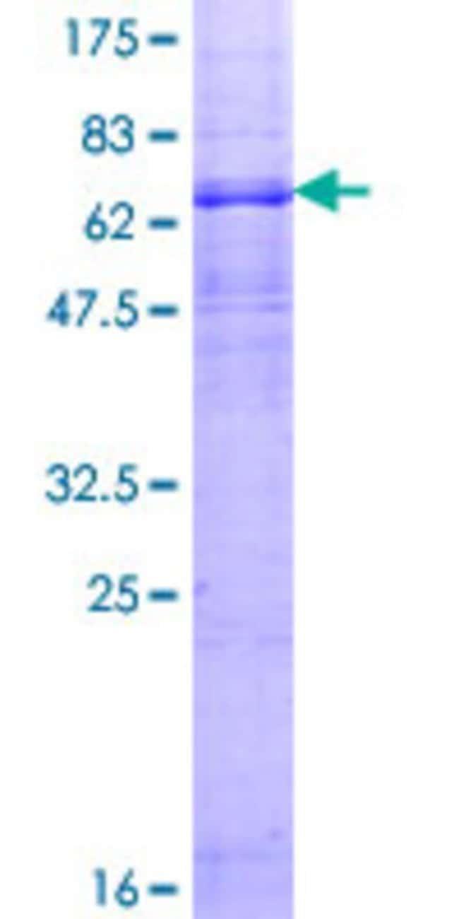 Abnova Human HTR1A Full-length ORF (NP_000515.2, 1 a.a. - 422 a.a.) Recombinant