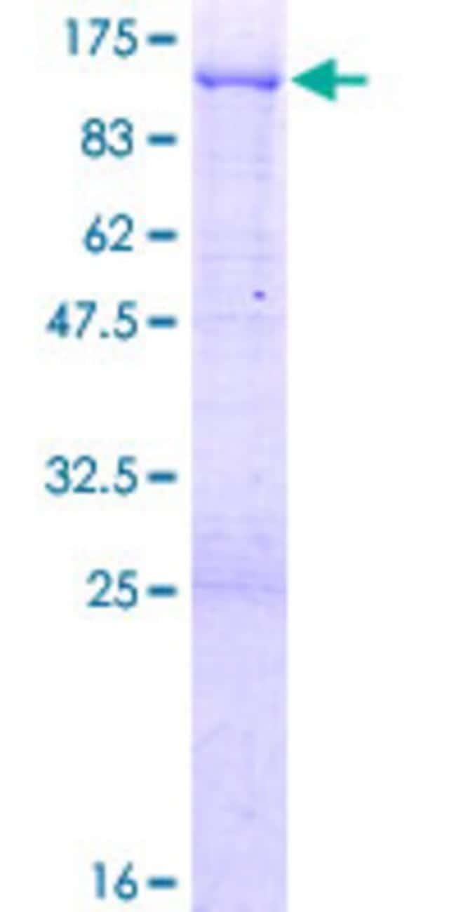 Abnova Human IFI16 Full-length ORF (AAH17059.1, 1 a.a. - 729 a.a.) Recombinant