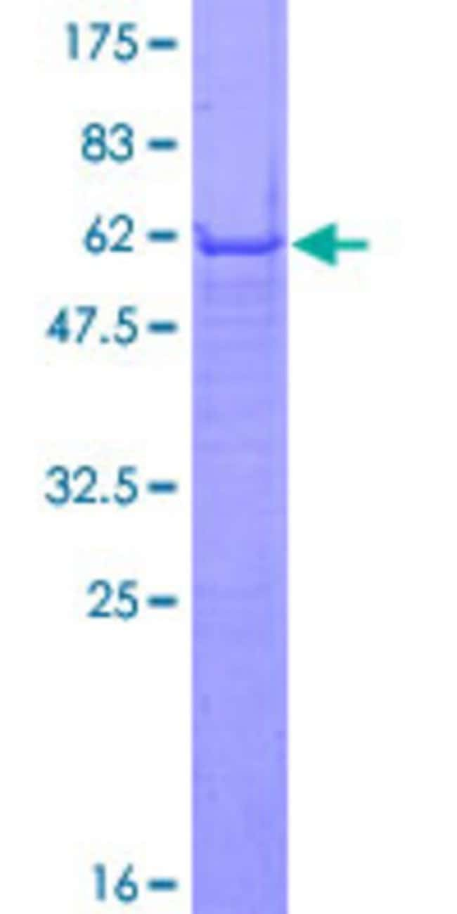 Abnova Human IFI35 Full-length ORF (NP_005524.1, 1 a.a. - 288 a.a.) Recombinant