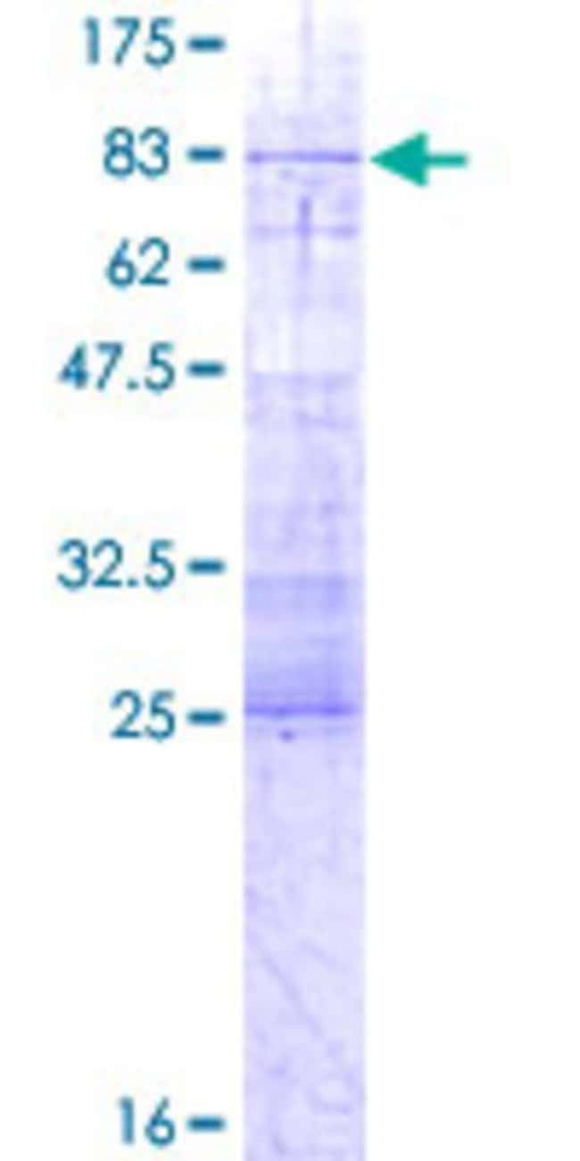 Abnova Human IFRD1 Full-length ORF (AAH01272.1, 1 a.a. - 451 a.a.) Recombinant