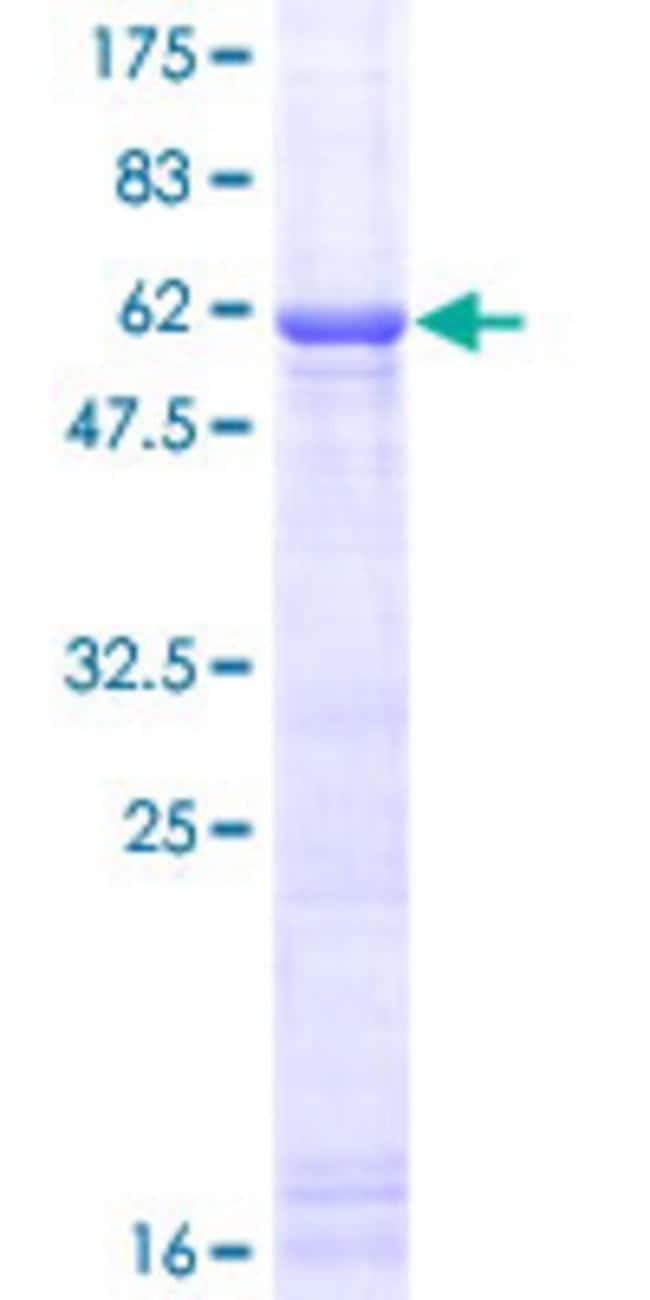 Abnova Human IL1A Full-length ORF (NP_000566.3, 1 a.a. - 271 a.a.) Recombinant