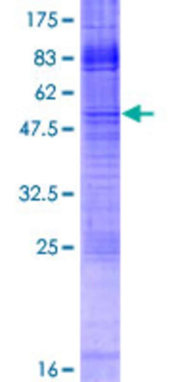 Abnova Human IMPA2 Full-length ORF (NP_055029.1, 1 a.a. - 288 a.a.) Recombinant