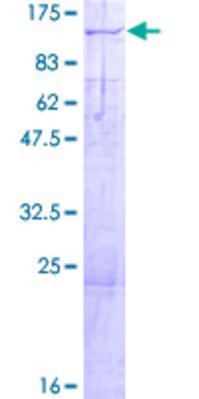 Abnova Human KIF3C Full-length ORF (NP_002245.4, 1 a.a. - 793 a.a.) Recombinant