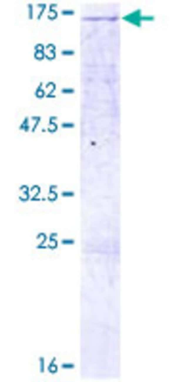 Abnova Human LLGL2 Full-length ORF (AAH64994.1, 1 a.a. - 1020 a.a.) Recombinant