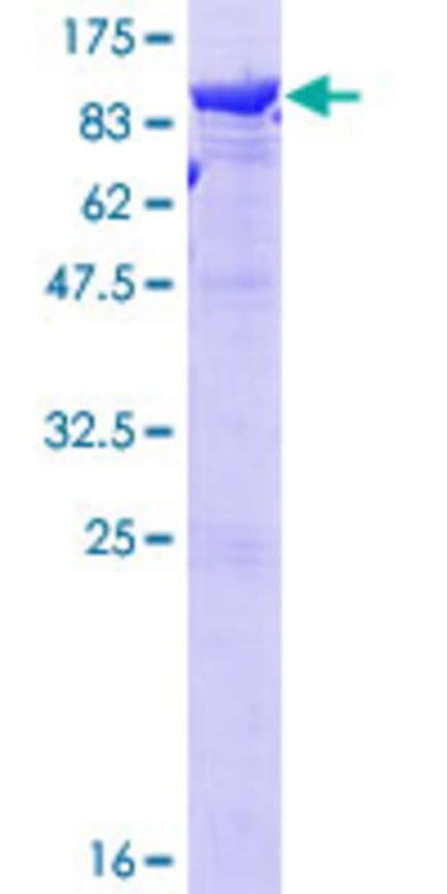 Abnova Human LTA4H Full-length ORF (NP_000886.1, 1 a.a. - 611 a.a.) Recombinant