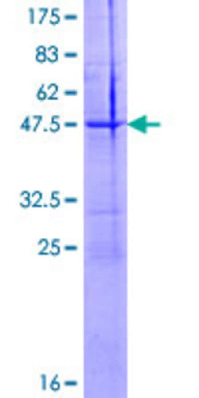 Abnova™Human NTF5 Full-length ORF (NP_006170.1, 1 a.a. - 210 a.a.) Recombinant Protein with GST-tag at N-terminal 25μg Abnova™Human NTF5 Full-length ORF (NP_006170.1, 1 a.a. - 210 a.a.) Recombinant Protein with GST-tag at N-terminal